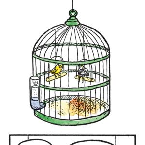 #19 - Birdcage